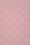 Weiße Gänseblümchen auf rosa Hintergrund Lizenzfreie Stockfotografie