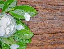 Weiße Gardenie jasminoides Blume stockbilder
