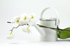 Weiße Gartenarbeit Stockfotografie