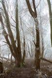 Weiße gefrorene Bäume in einem Park Stockfotos