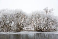 Weiße gefrorene Bäume in einem trostlosen Amsterdamse-Bos Lizenzfreies Stockfoto