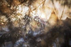 Weiße gefrorene Bäume und blauer Himmel Gefrorene Bäume Stockfotografie