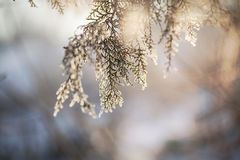 Weiße gefrorene Bäume und blauer Himmel Gefrorene Bäume Stockbilder