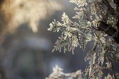 Weiße gefrorene Bäume und blauer Himmel Gefrorene Bäume Lizenzfreie Stockfotos