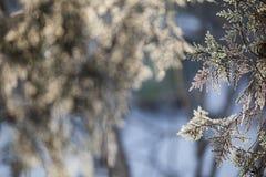 Weiße gefrorene Bäume und blauer Himmel Gefrorene Bäume Stockfotos