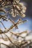 Weiße gefrorene Bäume und blauer Himmel Gefrorene Bäume Stockbild