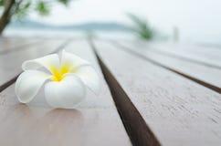 Weiße gelbe Blume auf hölzernem Boden Stockfotografie