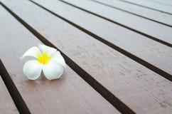 Weiße gelbe Blume auf hölzernem Streifenboden Lizenzfreie Stockfotografie