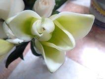 Weiße gelbe natürliche Blume im kalten ligth umgebend stockfotos