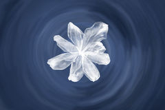 Weiße gemalte Blume. Stockfotos