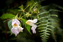 Weiße gesprenkelte Orchidee Stockbild
