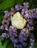 Weiße getrocknete Rose mit Wassertropfen unter Blättern und violetten Blumen lizenzfreies stockfoto