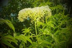 Weiße groupnof Blumen Lizenzfreies Stockbild