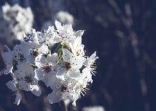 Weiße Gruppe für Blumen Lizenzfreies Stockfoto