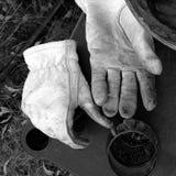 Weiße Handschuhe und Wein Lizenzfreie Stockfotos