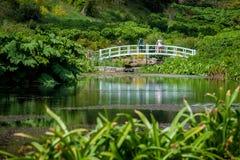 Weiße Holzbrücke über Teich Stockbilder