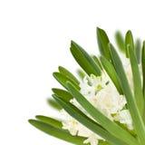 Weiße Hyazinthencollage Stockbilder