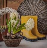 Weiße Hyazinthen in einem Korb und in gelben Gummistiefeln Stockbilder