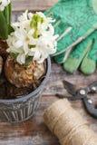 Weiße Hyazinthenblumen und Gartenzubehör Lizenzfreies Stockbild