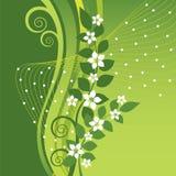 Weiße Jasminblumen auf Grün wirbelt Hintergrund Stockbild