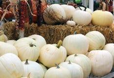 Weiße Kürbise mit indischem Mais stockfotos
