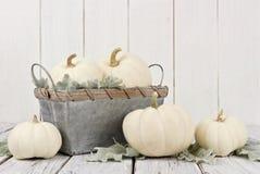 Weiße Kürbise und Dekor des Herbstes auf weißem Holz