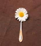 Weiße Kamille im Löffel auf einer braunen Tischdecke Lizenzfreie Stockfotografie