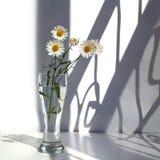 Weiße Kamillenblumen in einem Glasvase mit Wasser auf einem weißen Hintergrund im Sonnenlicht und Kurvenschatten stockbild