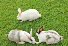 Weiße Kaninchen lizenzfreie stockfotos