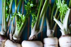 Weiße Karotten stockfoto