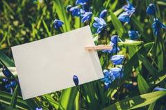 Weiße Karte auf blauem Scilla blüht Hintergrund Stockbilder