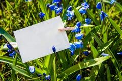 Weiße Karte auf blauem Scilla blüht Hintergrund Lizenzfreies Stockbild