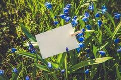 Weiße Karte auf blauem Scilla blüht Hintergrund Stockfotografie