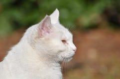 Weiße Katze Stockbild