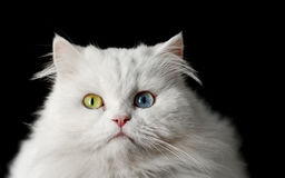 Weiße Katze Stockfoto
