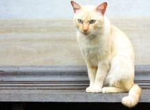 Weiße Katze Lizenzfreie Stockbilder