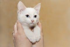 Weiße Katze Stockfotografie