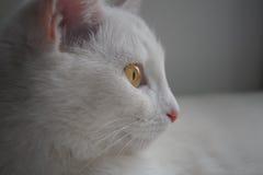 Weiße Katze Stockfotos