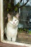 Weiße Katze auf dem Fensterbrett Lizenzfreie Stockfotos