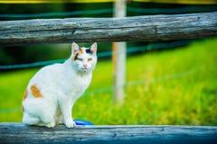 Weiße Katze auf dem hölzernen Klotz Stockbild