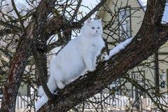 Weiße Katze auf einem Baum lizenzfreie stockfotografie