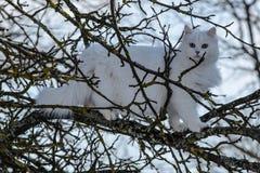 Weiße Katze auf einem Baum lizenzfreie stockfotos