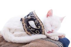 Weiße Katze auf einem weißen Hintergrund Lizenzfreies Stockfoto