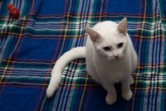 Weiße Katze auf einer Decke Stockfoto
