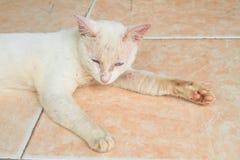 Weiße Katze auf Fliesen stockbild