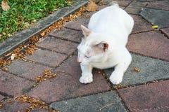 Weiße Katze auf konkretem Gehweg im Park Stockfotografie