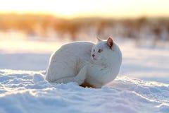 Weiße Katze auf Schnee Stockfotografie