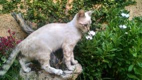 Weiße Katze auf Stein Stockbilder