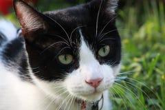 Weiße Katze des schwarzen Flecks am Park! Stockbilder
