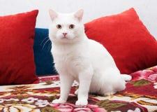 Weiße Katze, die auf einer bunten Bettdecke sitzt Lizenzfreie Stockfotos